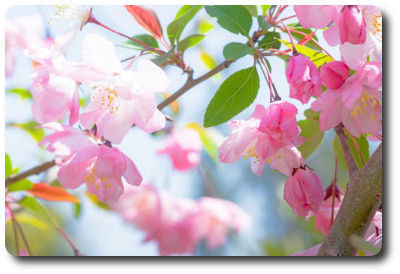 flower0501