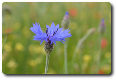 flower0829