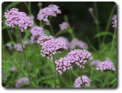 flower0827
