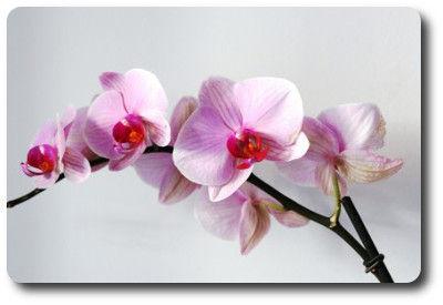 flower0619