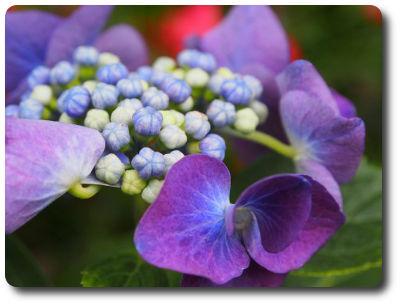 flower0825