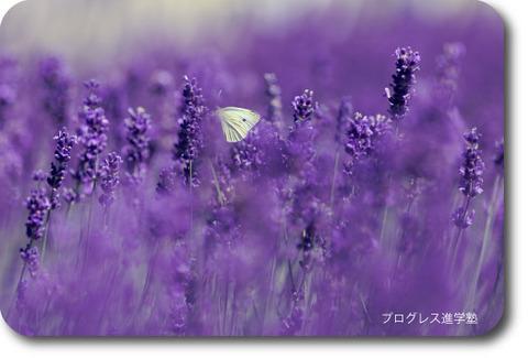 nurce-photo0624