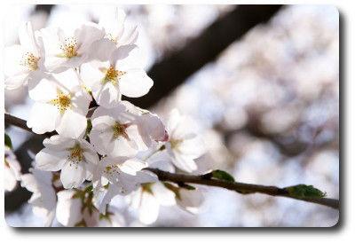 flower0430