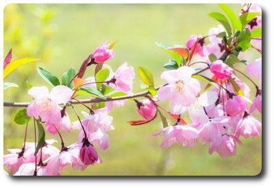 flower0502