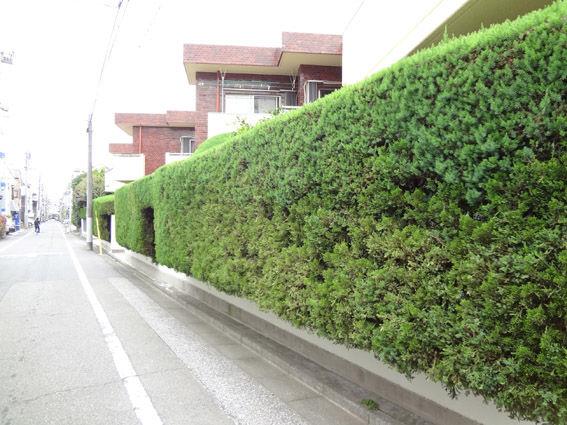 カイヅカイブキの画像 p1_31