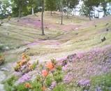 05.6.20 東藻琴芝桜公園