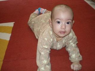 baby haihai renshu