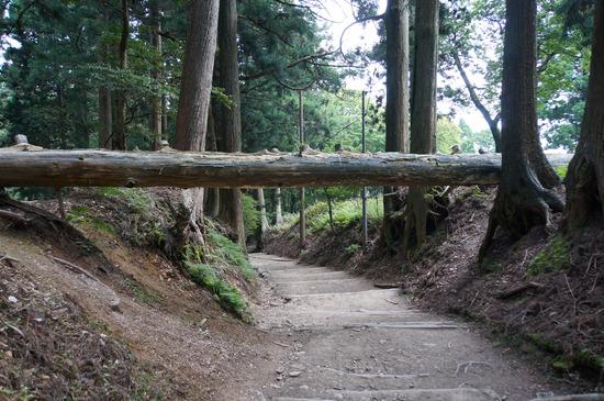 表参道巨大倒木