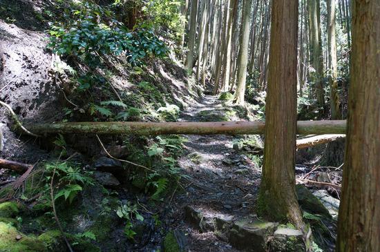 倒木に道を塞がれる