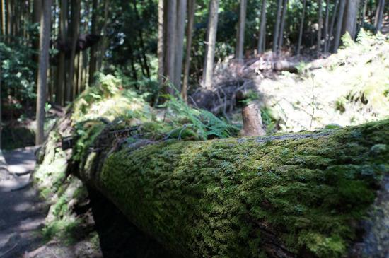 苔だらけの木