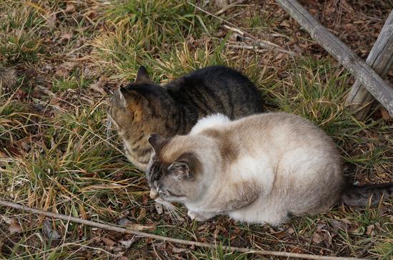 猫も寒そう