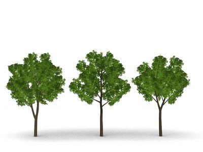 IMG_Tree01