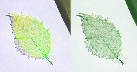 葉っぱ04