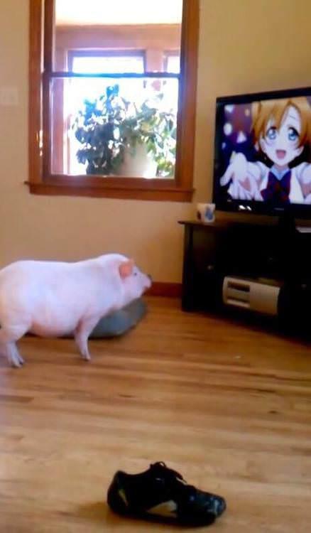 なんj アニ豚