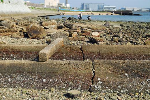 甲子園浜遺構 (23)