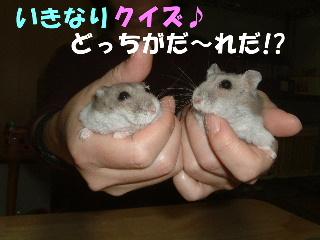 いきなりクイズ!