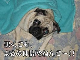 黒くてもまるの仲間やねんで〜!!