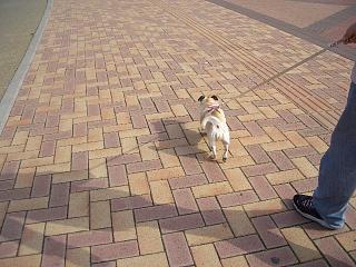 さぁ歩くよ〜