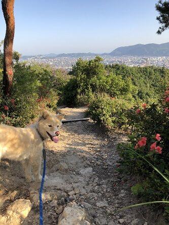 らき散歩4