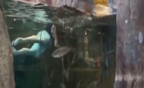 【動画】バカッター「ペットショップの水槽で泳いでみたw」 → ヤバイことになる・・・