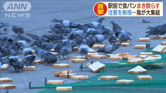 鳩の餌として駅前に大量の食パンを撒き散らす住民が迷惑すぎる、なんでこんなことすんだ…