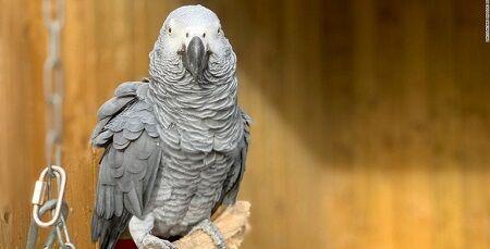 動物園のヨウムさん、来場者に対してとんでもないことを言い出してしまい、公開中止に