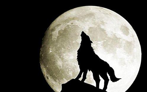 【朗報】『人狼』のPCオンラインゲーム化キタ━━━━(゚∀゚)━━━━!! ハンゲームから7月開始!!