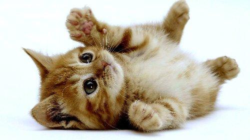 猫好きだけどアレルギーに苦しむ人に朗報!! 緩和してくれる画期的な○○登場へ!!
