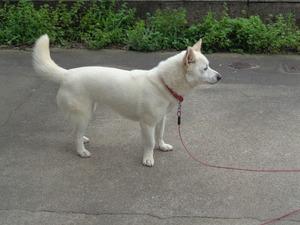 DSC01716.JPG 番犬