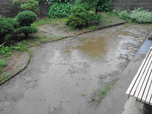 DSC00986.JPG 雨のドッグラン