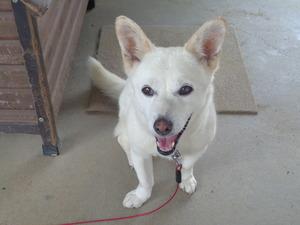 DSC01643.JPG 14:25 番犬だよ  (1)