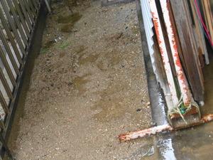 DSC07150.JPG 濡れた場所ではウンチしない