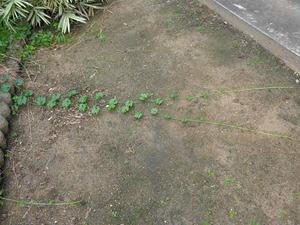 DSC04038 (1) 雑草が伸びる