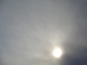 DSC08061.JPG 14:41 冬の太陽