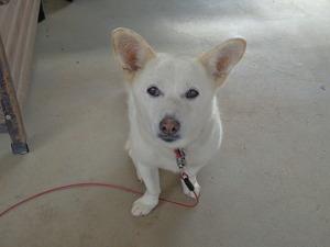 DSC05151.JPG チャンと番犬したわよ