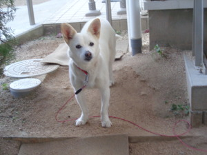 DSC06270.JPG 番犬