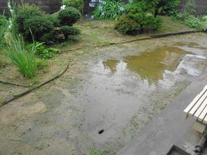 DSC01705.JPG ぴっぴの庭