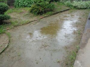 DSC01056.JPG 雨です. JPG