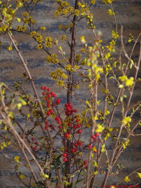 Top2017 03 23 黄色い花と赤い実のコラボ