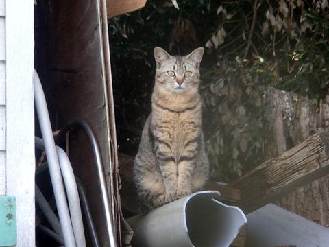 土肥 猫2