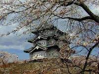 弘前城天守閣と桜
