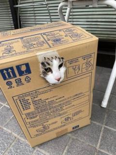 段ボール箱のまま病院に連行された猫 穴からのぞく切ない顔に「その手があったか!」「クロネコ宅配ですか?!」