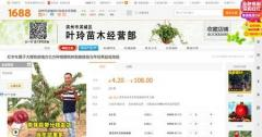 日本の種苗、中韓で無断流通か「紅ほっぺ」など36品種 農水省が調査