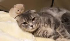 我が子が可愛くて仕方がないお母さん猫