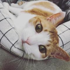人なれしていない怖がりの猫…飼い主が体調を崩した日を境に、そばにいてくれるように