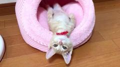 「どうしたの?」と思わず聞きたくなってしまう子猫。その不思議な行動に思わずホッコリ♡