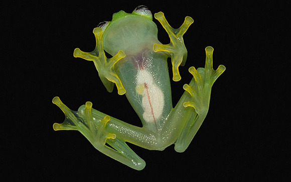 Kermit-in-real-life