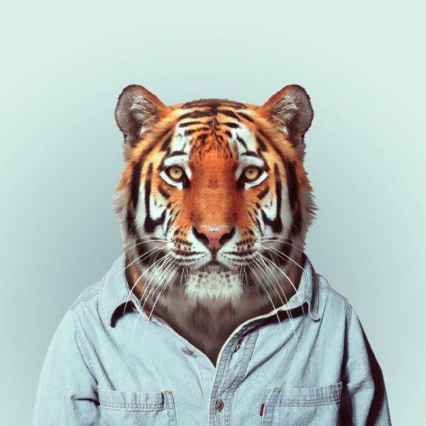 8-tiger-portrait-photography