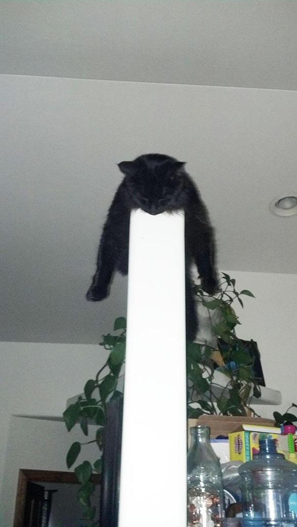funny-sleeping-cats-29