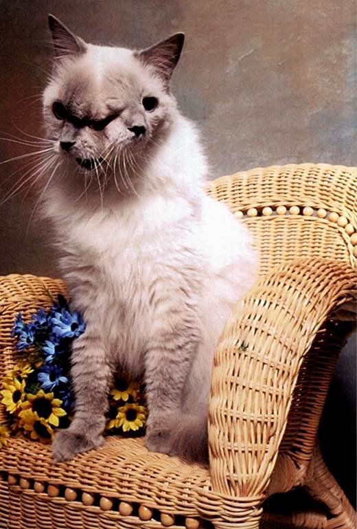 The-Longest-Living-2-Faced-Cat-Frank-And-Louie-02